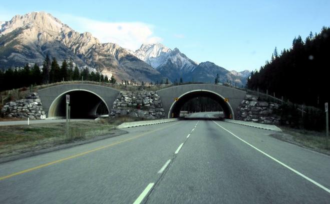 trans-canada-wildlife_overpass